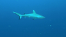 Коралловый риф Охотники и жертвы 3D