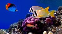 Coral fish Виртуальный аквариум