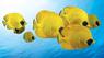 Коралловый риф Удивительные подводные миры 3D