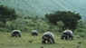 BBC: Галапагосы